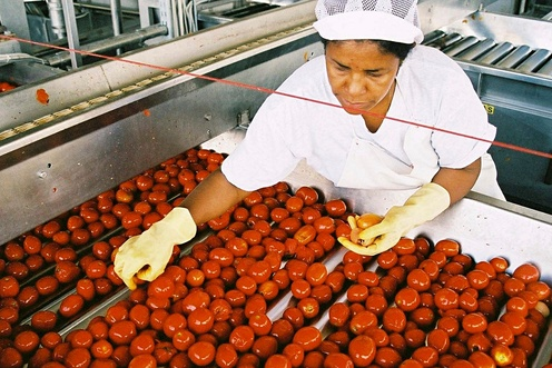 grading processed tomatoes