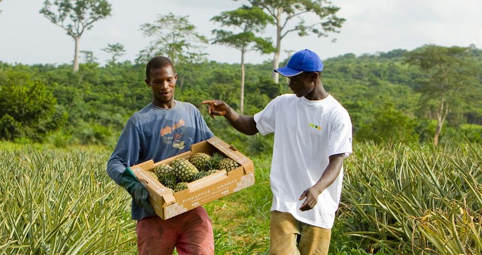 Smallholder farmers in Ghana