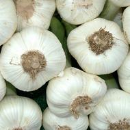 Výživa cibule