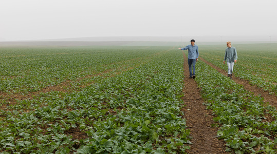 Agronomy Advice - Autumn micronutrients improve oilseed establishment