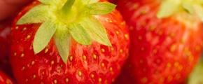 Strawberry - growth by using Yara Fertilizer