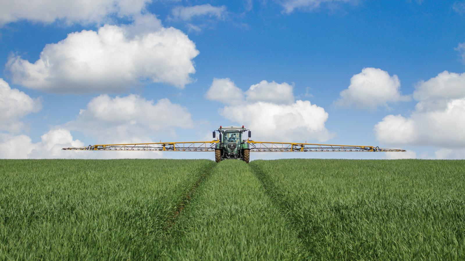 Plan nutricional de trigo