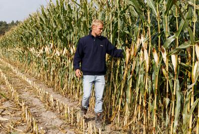 Farmer in the maize field
