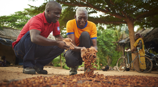Soils, Liming and Salinity in Cocoa
