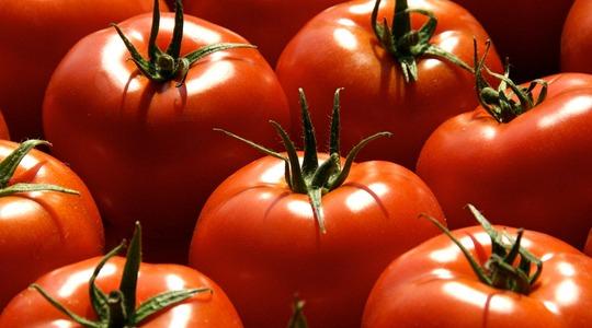 토마토 영양소