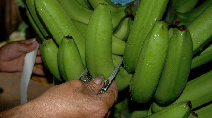 Banana Market Requirements