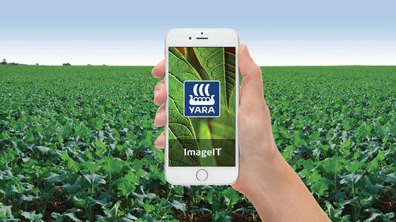 ImageIT App Oilseed Rape