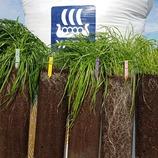 Miten onnistua nurmenviljelyssä ensi vuonna?