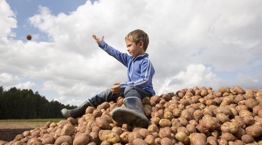 Kartoflers sundhed