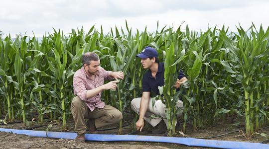 Calidad maíz