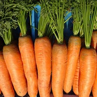 Porkkanan lannoitus