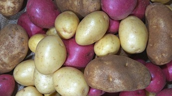 Potato Crop Nutrition