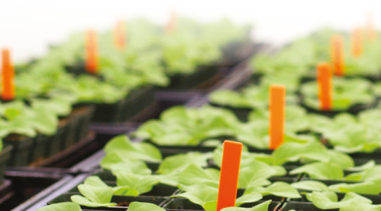 """Nutrient Solutions for Greenhouse Crops"""""""