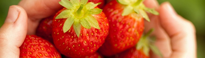 Yara Fertilizer used for strawberry