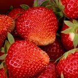Ympäristökorvausjärjestelmä taimitarhoille, mansikalle, vadelmalle, mustaherukalle, muille marjoille ja hedelmille