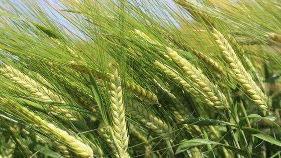 Crop Nutrition Advice