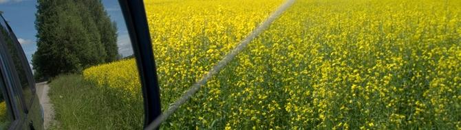 oil seed rape field - using Yara fertilizer