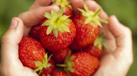 딸기의 건강을 향상시키는 방법