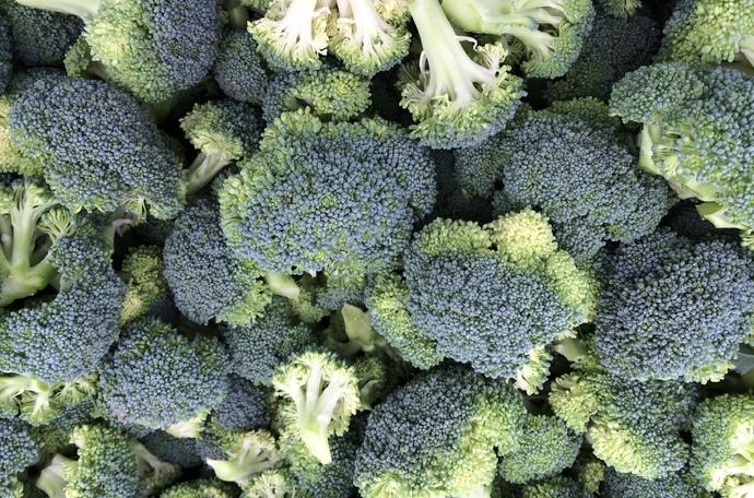 Pokaz odmian brokułów - Rusinowo, Sadlinki