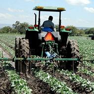 Improving Vegetable Brassica Taste