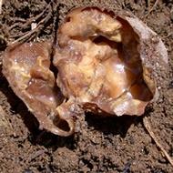 A lágyrothadás előfordulásának csökkentése a burgonyánál