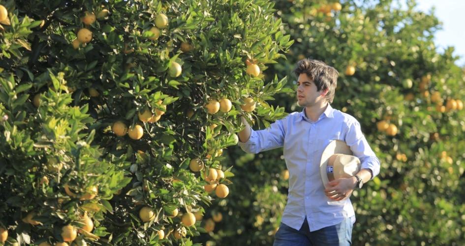 Man in citrus farm