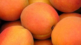 Stone Fruit Crop Nutrition