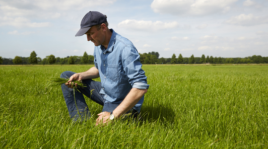 Agronomy Advice - Make your grassland fertiliser work harder