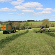 Interpreting grass sugar and nitrate levels for silage