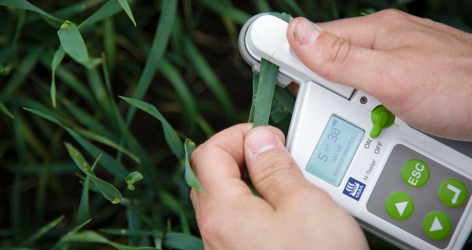 N-Tester midiendo niveles de N foliar