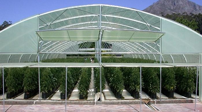 glasshouse production of tomatoes