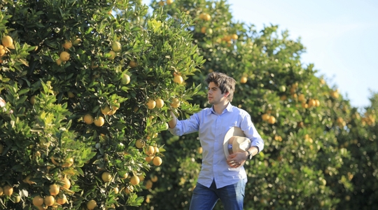 How to increase citrus yield