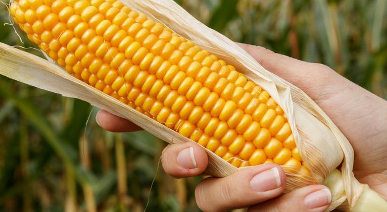 Incrementar la producción de maíz para grano