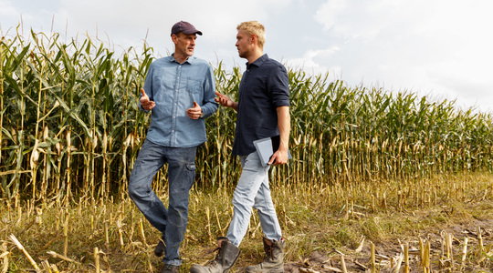 Boosting establishment of forage maize