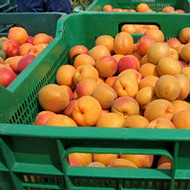 Reducing Storage Rots in Stone Fruit