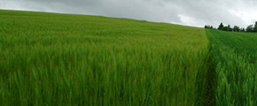 Green field - used Yara Plant nutrients  for growth