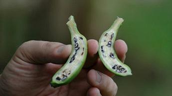 Seeded banana