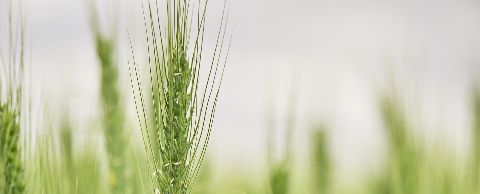 YaraVita® - Sporenelementen meststoffen