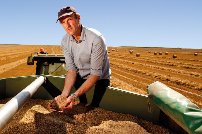 Zwiększanie plonu pszenicy