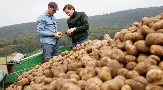 Información esencial sobre la patata