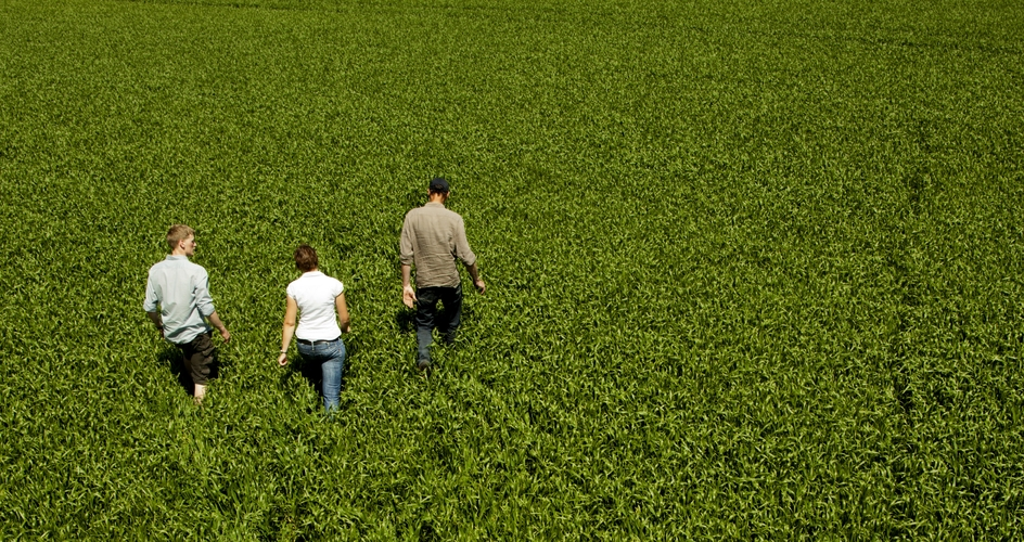 Three people in a field
