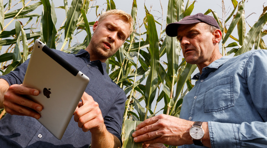 Maize farmers discussing with a digital tablet