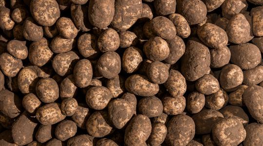 yara, fertilizante, batatas