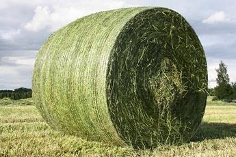 Kunstgjødsel avlingsverdi i gras