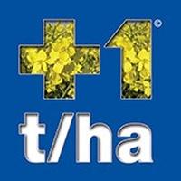 + 1 t/ha