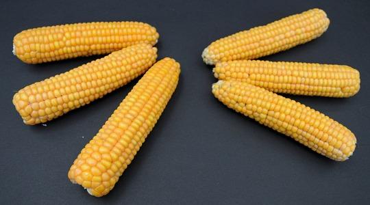 potassium deficiency in corn cob