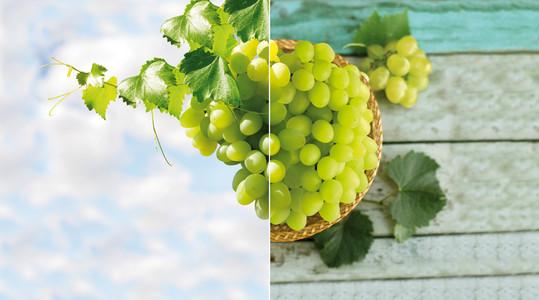 Calidad uva