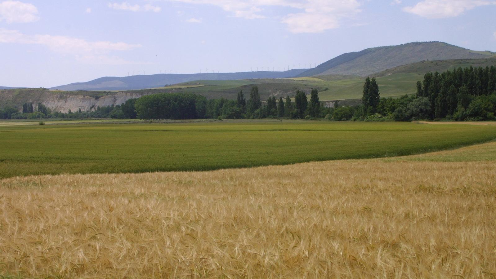 Campos de Navarra