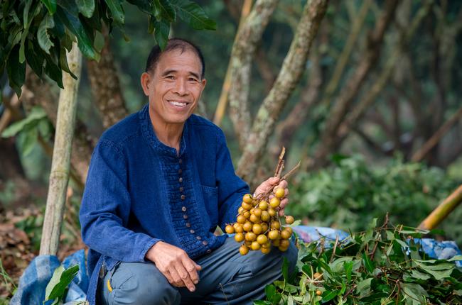 Yara farmer holding palm fruit