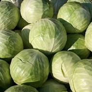 Increasing Calcium, Vitamin C and Glucosinolates Levels in Vegetable Brassica